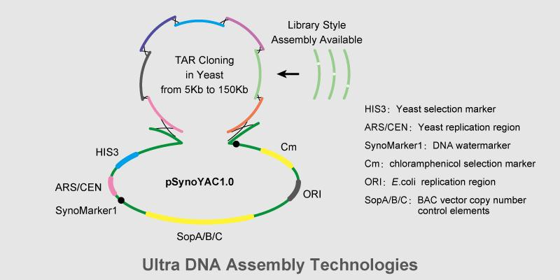 Synthesis and Assembly Services on Gene Cluster and Small Genome