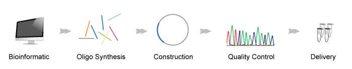 standard gene synthesis process