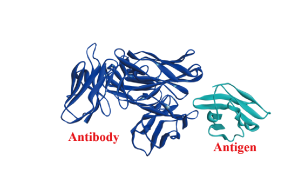 antibody-design-and-production-4
