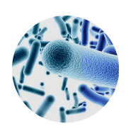 bacterial-expression-system