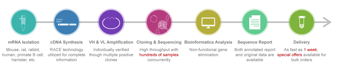 standard-hybridoma-sequencing-process