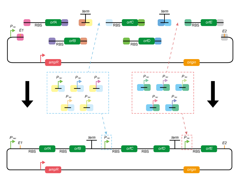 metabolic-pathway-synthesis-and-library-assembly-services