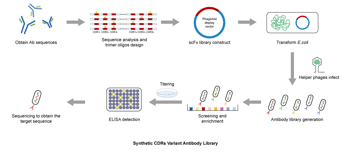 synthetic-CDRs-variant-antibody-library